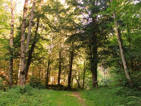WaldApotheke Sachrang - Märchenhafter Eibenwald, © Tourist Info Aschau im Chiemgau