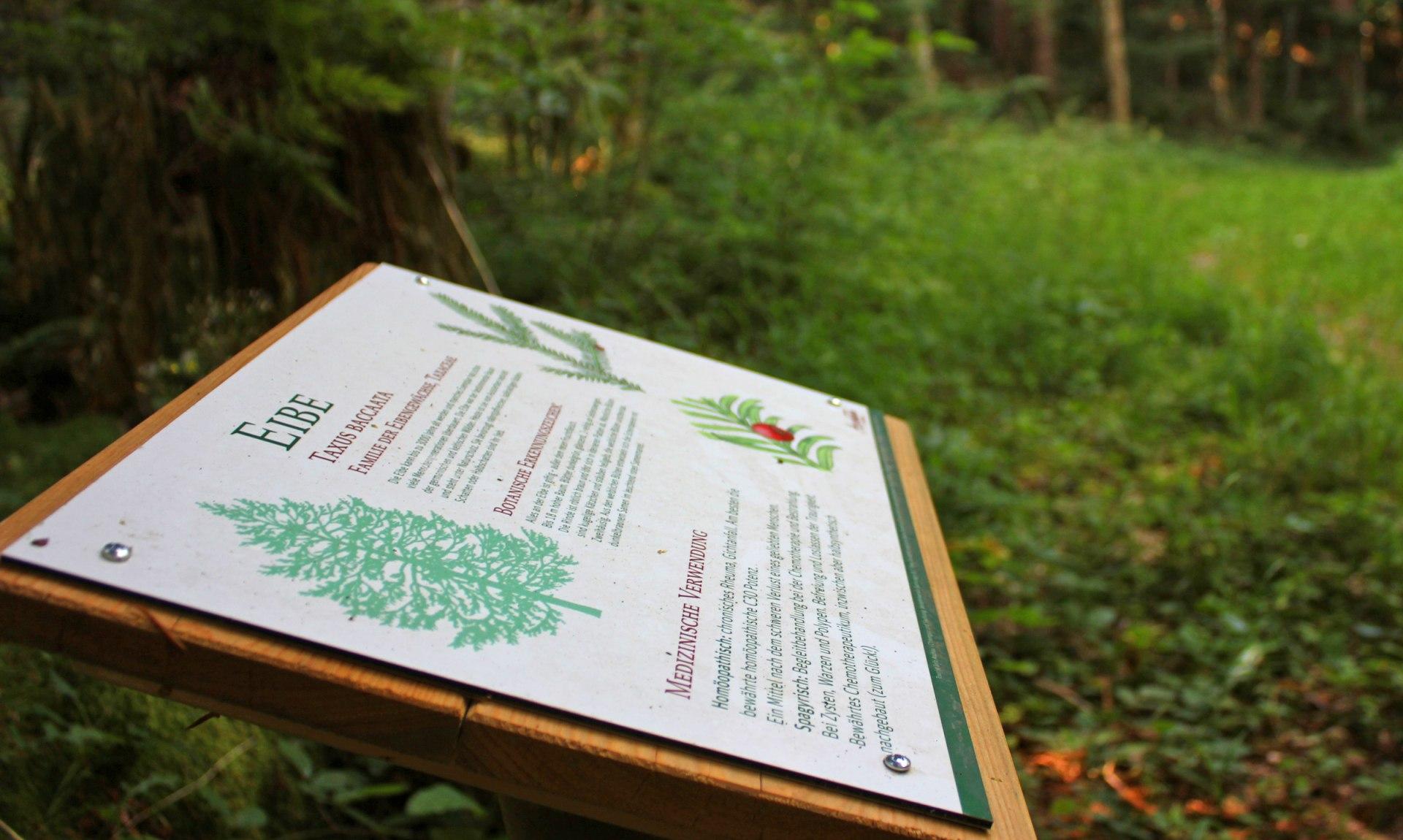WaldApotheke Sachrang - Eibenwald, © Tourist Info Aschau im Chiemgau