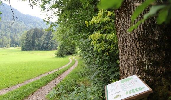 Weg WaldApotheke, © Tourist Info Aschau im Chiemgau