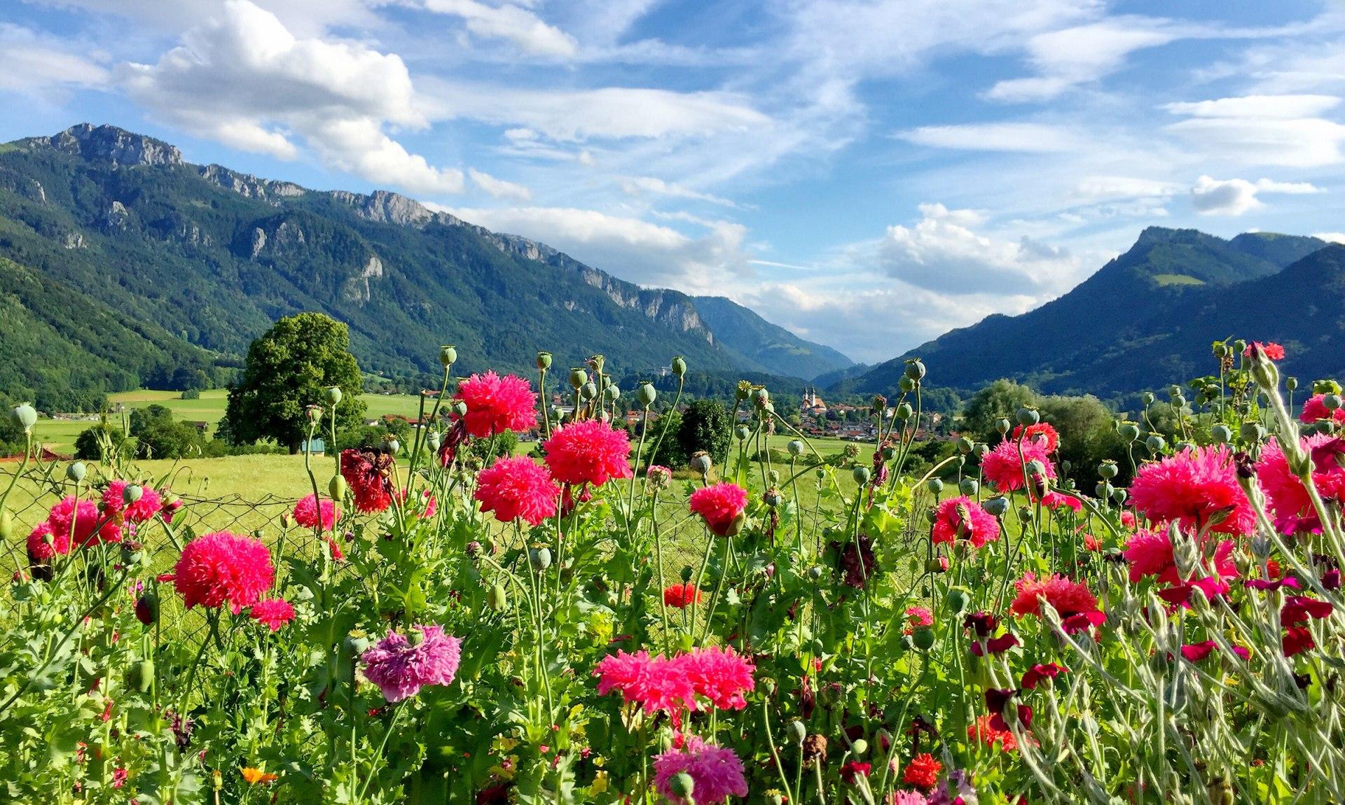 Landschaft Blumen, © Herbert Reiter