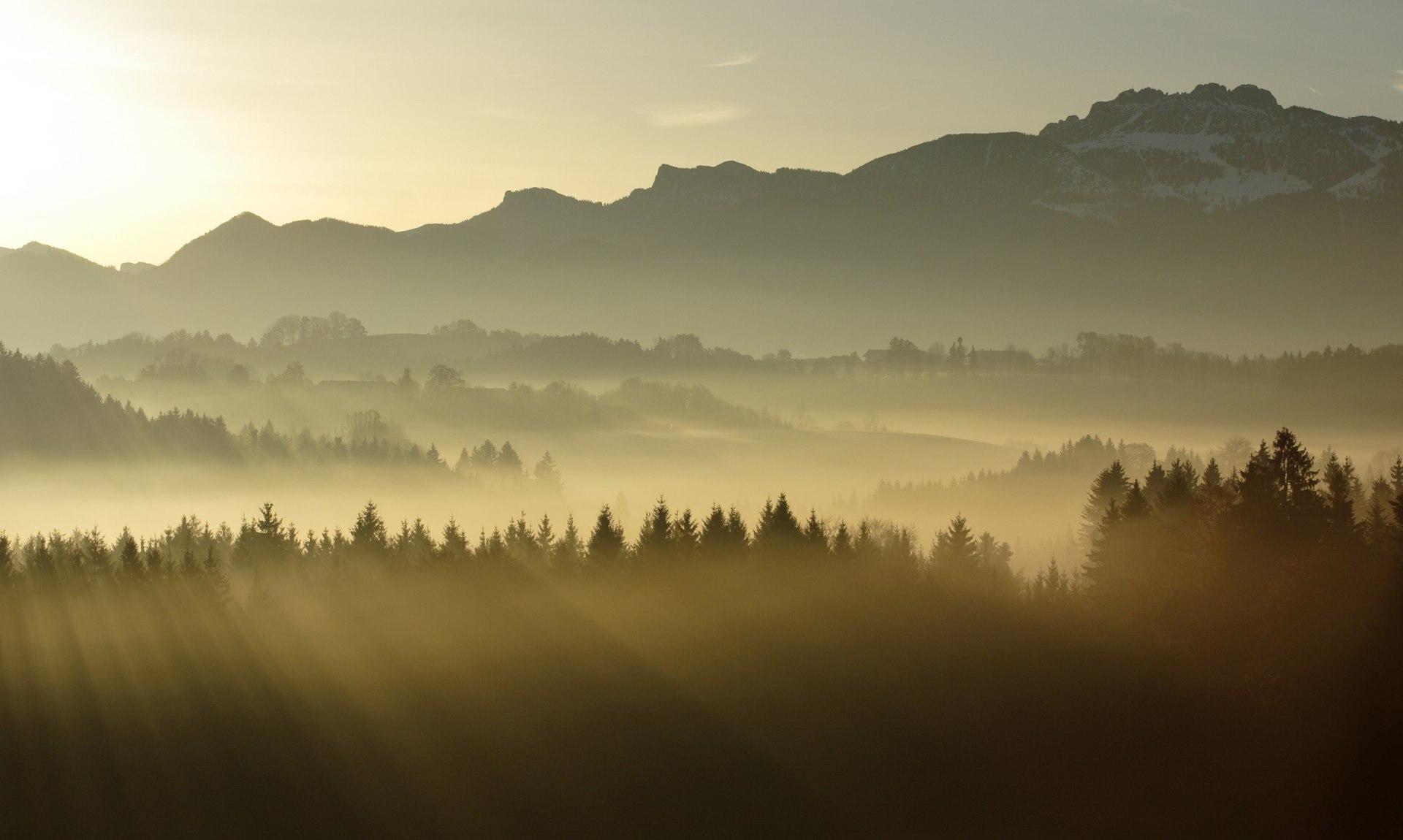 Da Woid, © Josef Reiter