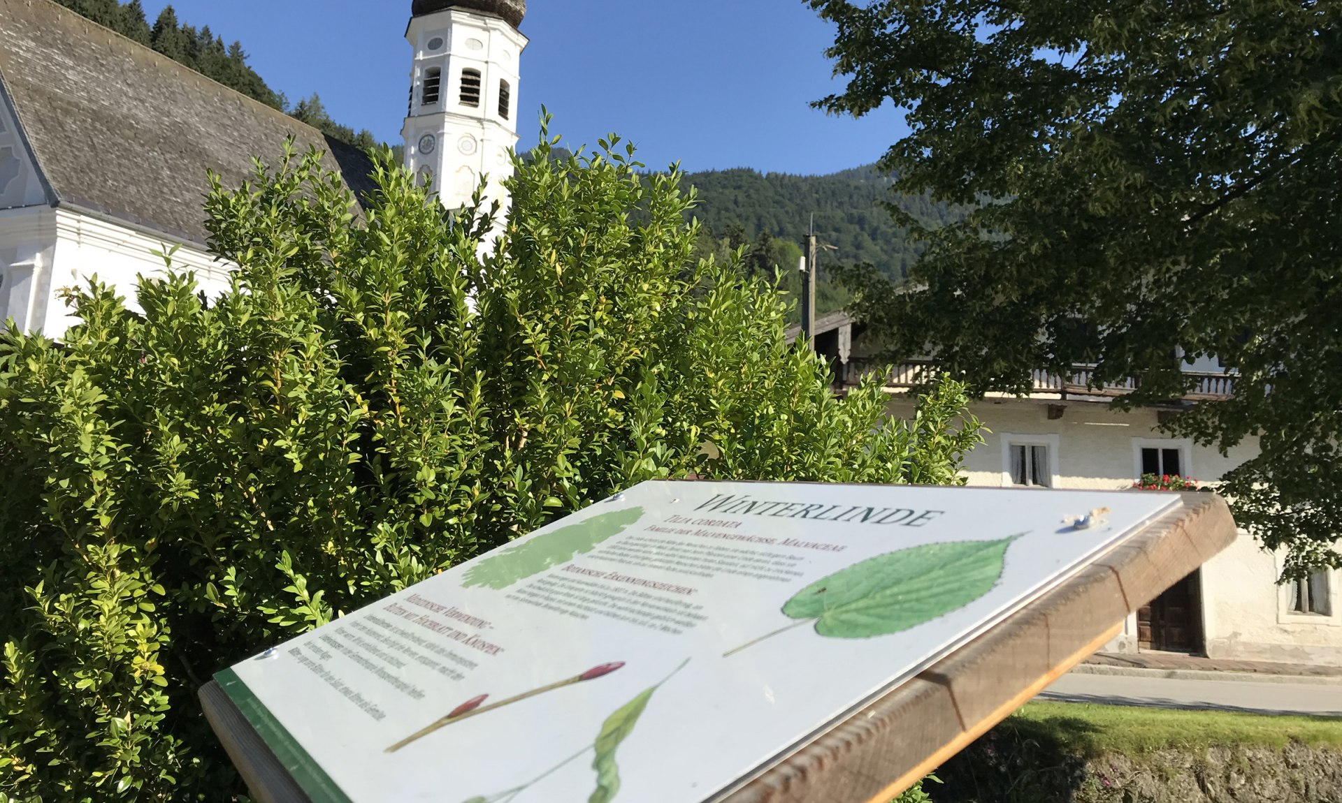 WaldApotheke Sachrang - Winterlinde an der Kirche, © Tourist Info Aschau im Chiemgau