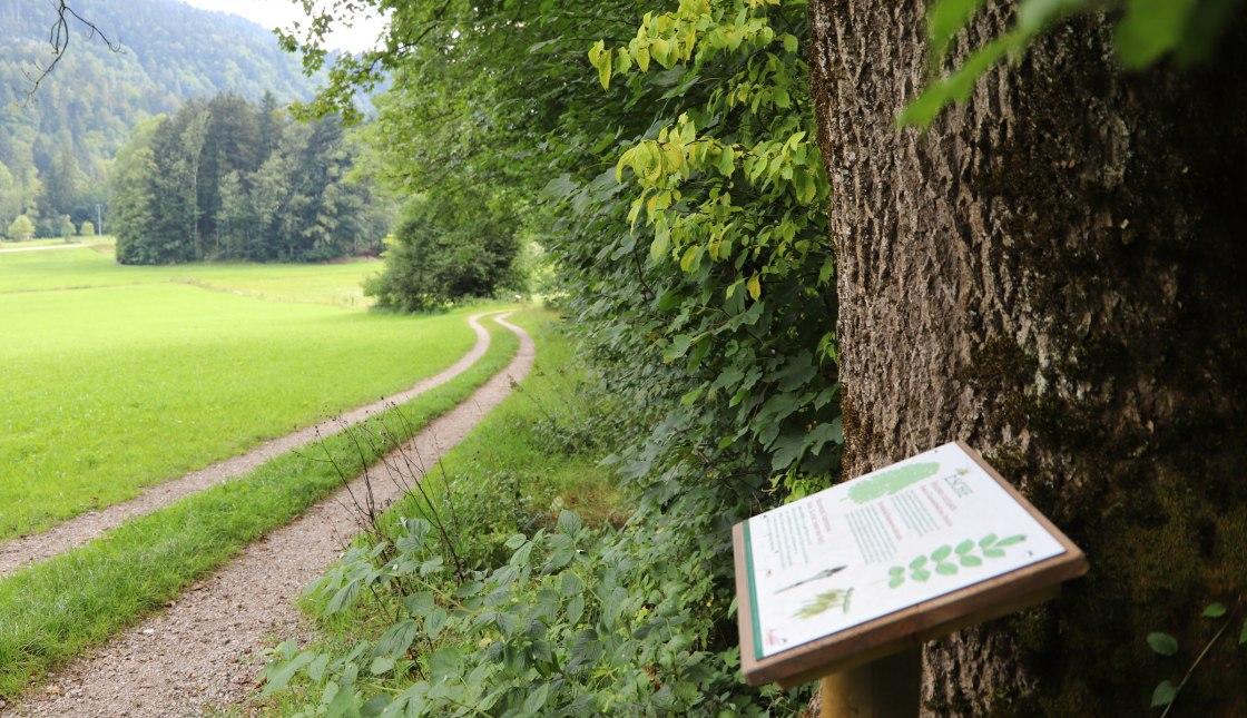 WaldApotheke in Sachrang, © Tourist Info Aschau im Chiemgau