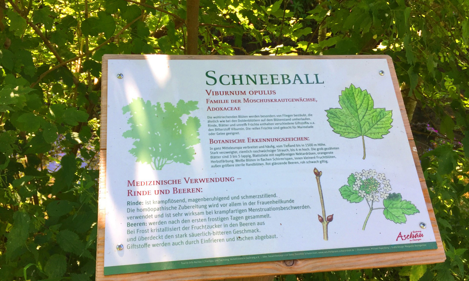 """WaldApotheke Sachrang - Schild vom Baum """"Schneeball"""", © Tourist Info Aschau im Chiemgau"""