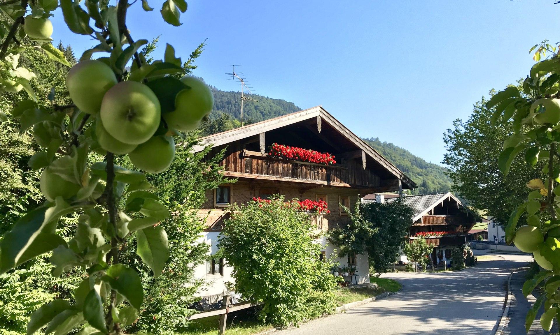 WaldApotheke Themenweg Sachrang - Weg vorbei an den alten Bauernhöfen im Ort, © Tourist Info Aschau im Chiemgau